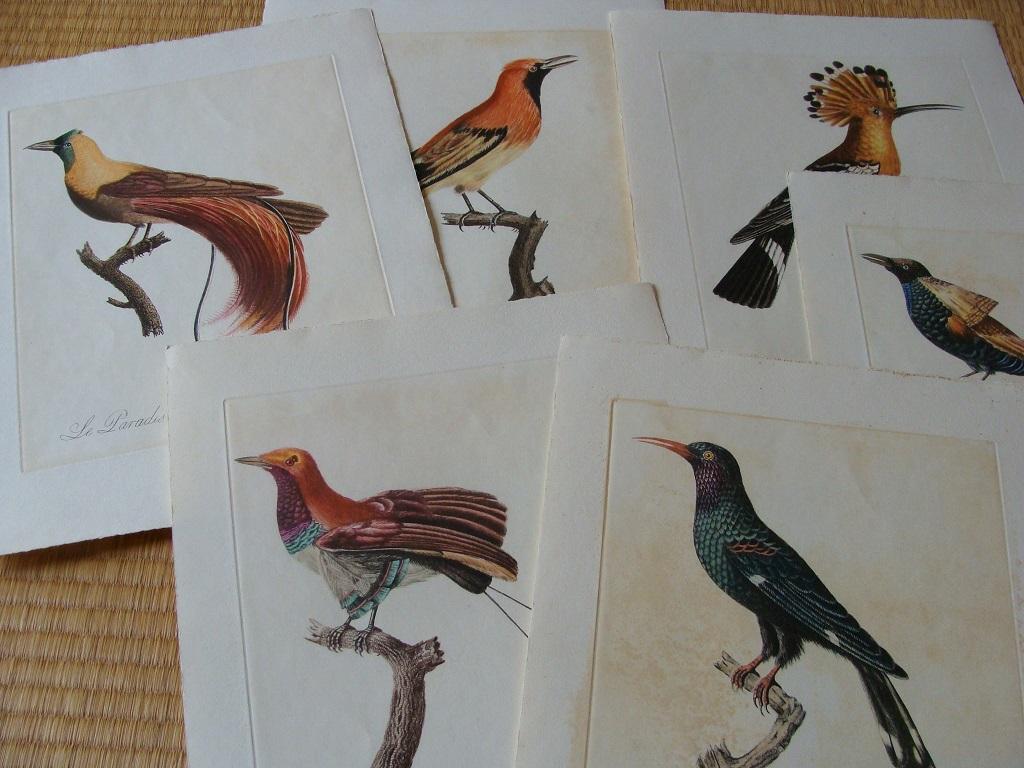 鳥の版画(Audebert & Vieillot)を ...